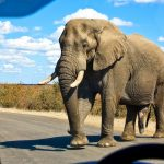 Self Drive Safari in Africa with Safari Escapes